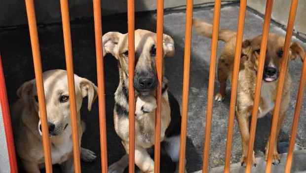 Projekt Posvojite prijatelja pomaga zapuščenim živalim (foto: Rasto Božič/STA)