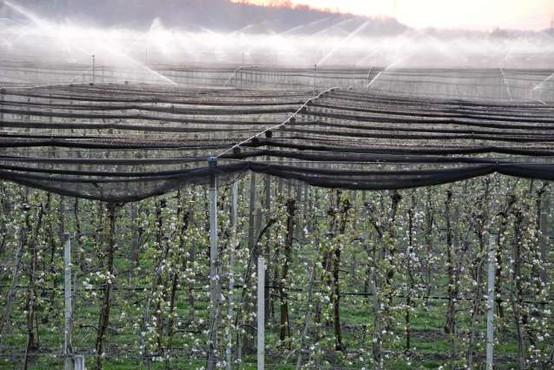 Temperature drugo noč zapored pod lediščem, nekateri sadjarji pridelek reševali z oroševanjem