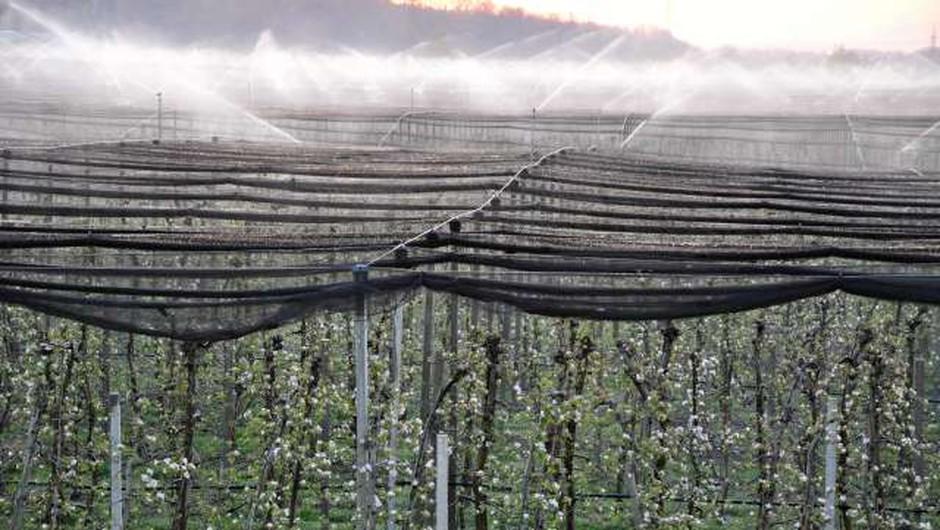 Temperature drugo noč zapored pod lediščem, nekateri sadjarji pridelek reševali z oroševanjem (foto: Rasto Božič/STA)