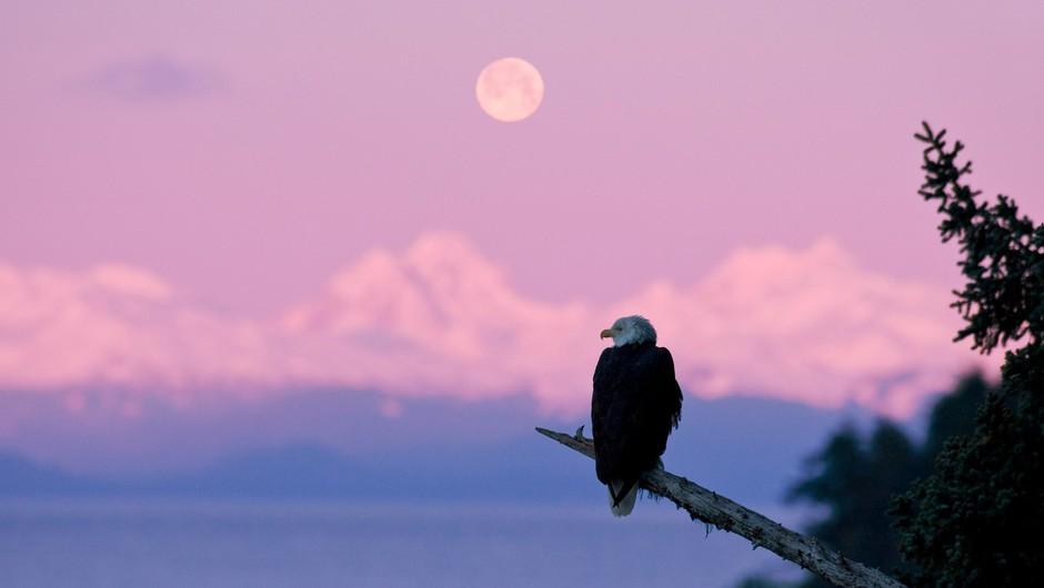 Aprilska polna luna bo največja in najsvetlejša super polna luna v 2021 (foto: profimedia)