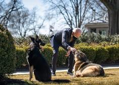 Bidnovega psa Majorja zaradi ugrizov dali na trening