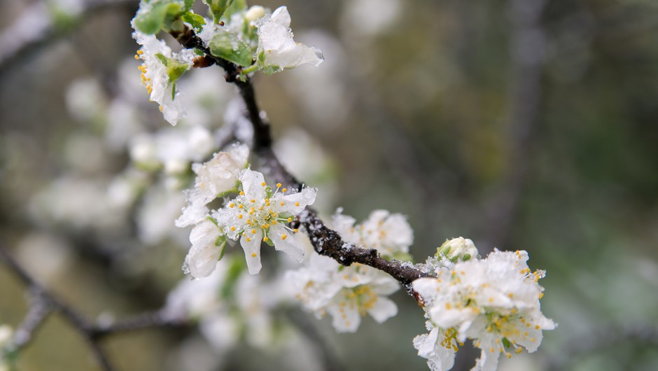 Danes in v petek še nevarnost pozebe, od sobote naprej bodo jutra toplejša (foto: Shutterstock)