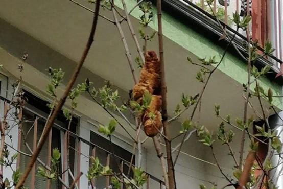 Ljudi je prestrašilo monstruozno bitje na drevesu, ko pa so odkrili, za kaj gre, smeha ni bilo konec!