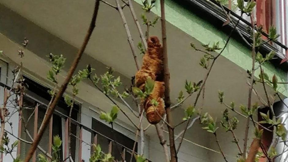 Ljudi je prestrašilo monstruozno bitje na drevesu, ko pa so odkrili, za kaj gre, smeha ni bilo konec! (foto: KTOZ Krakowskie Towarzystwo Opieki nad Zwierzętami)