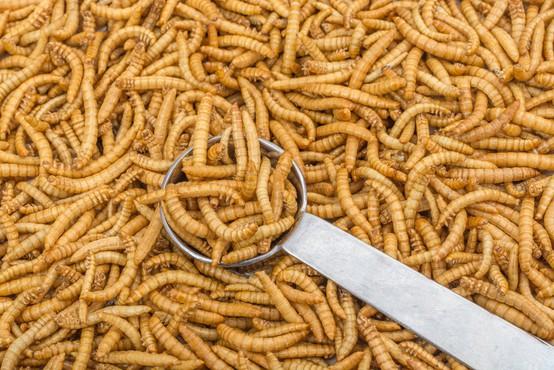 V EU kot novo živilo odobrena prva žuželka