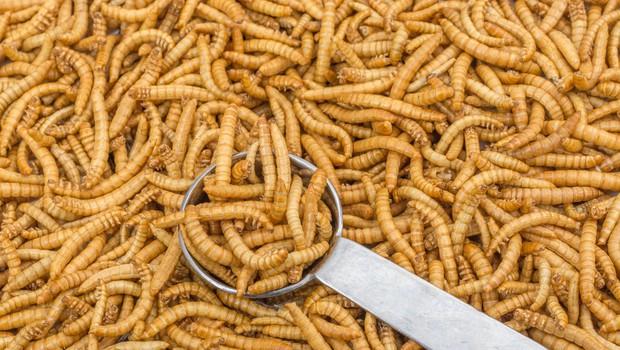 V EU kot novo živilo odobrena prva žuželka (foto: Profimedia)