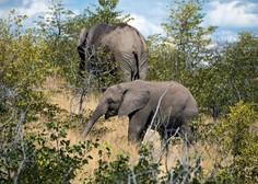 Strela pokončala čredo divjih slonov, poginilo je 18 živali