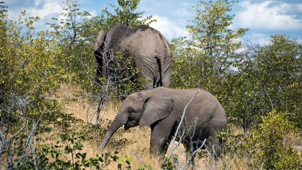 Strela pokončala čredo divjih slonov, poginilo je 18 živali (foto: profimedia)