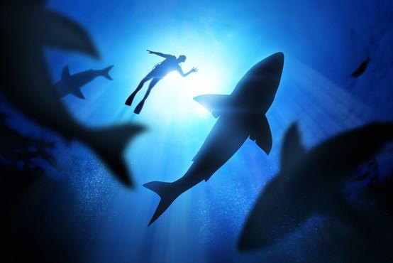 Na plaži v bližini Sydneyja po napadu morskega psa umrl deskar