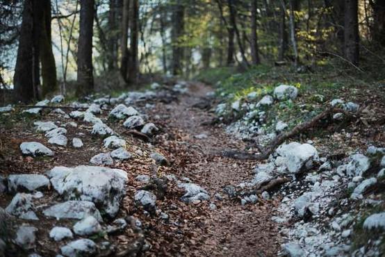 Na Kočevskem odprli pragozdno pot Krokar
