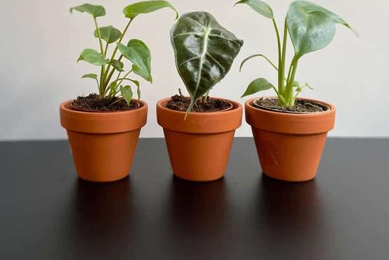 Tako pomembne so zelene in sobne rastline za vaše duševno zdravje