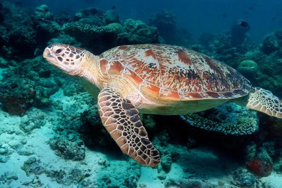 V Ekvadorju potrdili odkritje vrste želve, ki so jo imeli za izumrlo