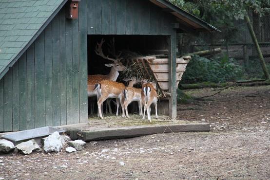 Ljubljanski živalski vrt poživil prirastek jelenjadi