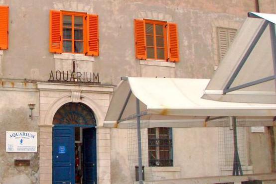 Piranskemu akvariju grozi zaprtje