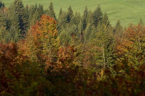 Znano in neznano o Sloveniji: Četrta najmanjša država EU, več kot polovico prekrivajo gozdovi