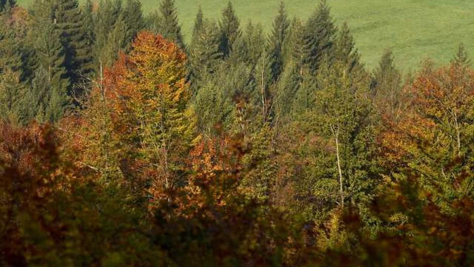 Znano in neznano o Sloveniji: Četrta najmanjša država EU, več kot polovico prekrivajo gozdovi (foto: Tamino Petelinšek/STA)