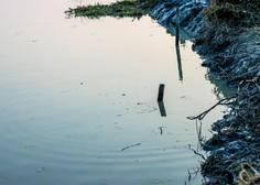 Nelegalno odloženo komunalno blato, ki je povzročilo ekološko katastrofo v Hočah, naj bi bilo s Ptuja