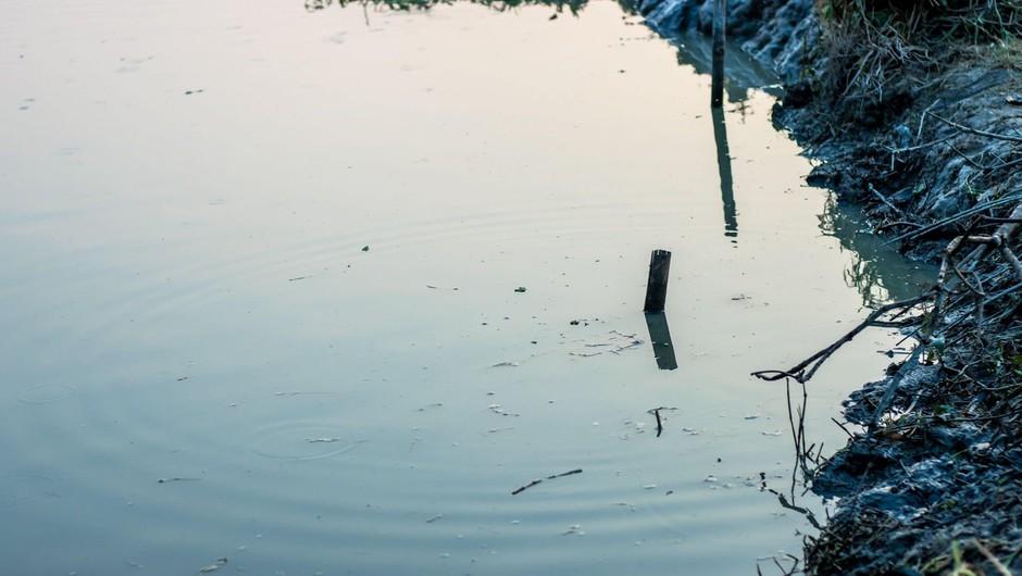 Nelegalno odloženo komunalno blato, ki je povzročilo ekološko katastrofo v Hočah, naj bi bilo s Ptuja (foto: profimedia)