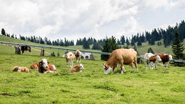 Po brezplačno zdravje na Krvavec (in katera zelišča rastejo na 1500 metrih nadmorske višine) (foto: profimedia)