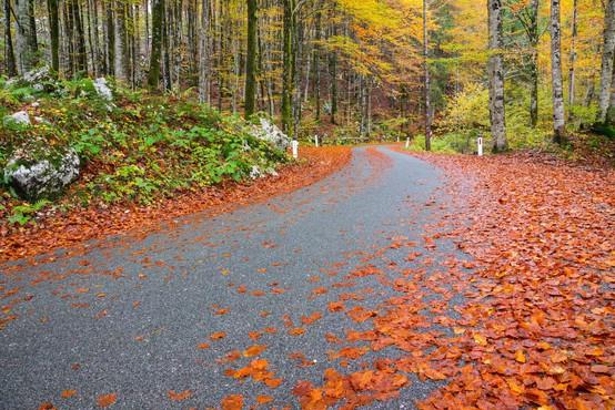 Po slovenskih cestah bi skoraj obkrožili Zemljo