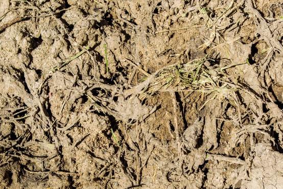 Sodno pridržanje za četverico, vpleteno v nezakonito odloženo blata v Hočah