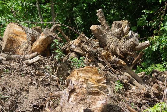 Slovenija brez celovite rešitve za ravnanje s komunalnim blatom