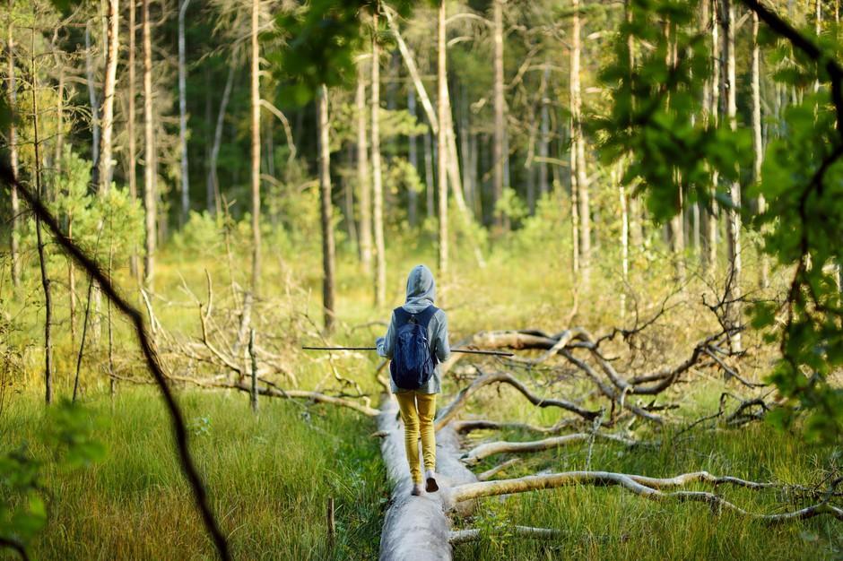 """V Sloveniji gozdove, gore in vodo jemljemo """"kar tako"""" za samoumevno (foto: Profimedia)"""