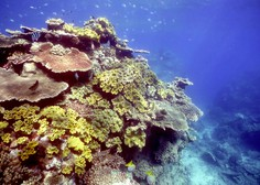 Avstralija nasprotuje Unescovi umestitvi Velikega koralnega grebena med ogrožena območja