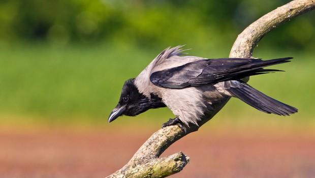 Neurje na Hrvaškem zdesetkalo tudi ptice (foto: Profimedia)