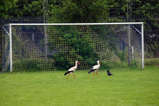 Štorklja je imela veliko dela: slovenski nogometaši, ki so se v tem letu razveselili naraščaja
