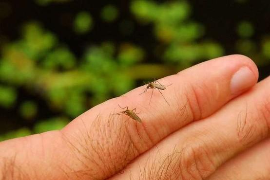 Biologi letos zaznavajo povečano število komarjev in miši