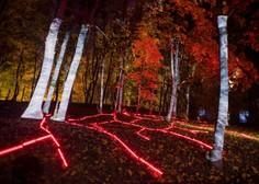 Japonski gozd zavzela digitalna svetlobna instalacija