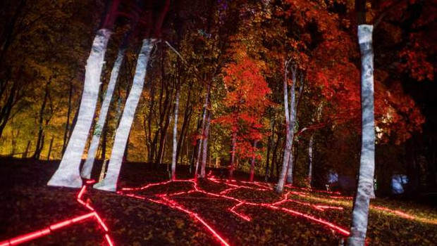 Japonski gozd zavzela digitalna svetlobna instalacija (foto: Xinhua/STA)