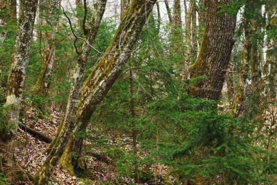 """""""V gozdu smo gostje, zato upoštevajmo navodila gozdarskih strokovnjakov in lastnikov gozdov!"""""""
