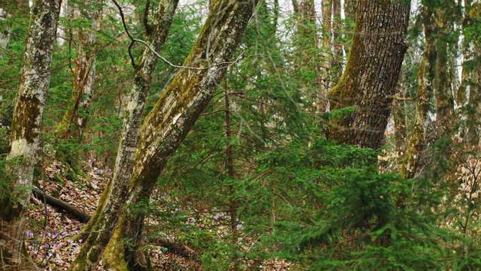 """""""V gozdu smo gostje, zato upoštevajmo navodila gozdarskih strokovnjakov in lastnikov gozdov!"""" (foto: Domen Grogl/STA)"""