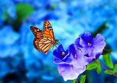 Nekaj zanimivosti o metuljih, ki so kazalnik zdravega okolja
