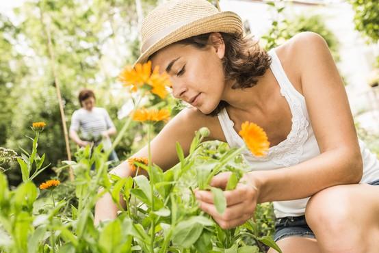 Kaj potrebujete, da bo vaš vrt lepši od sosedovega