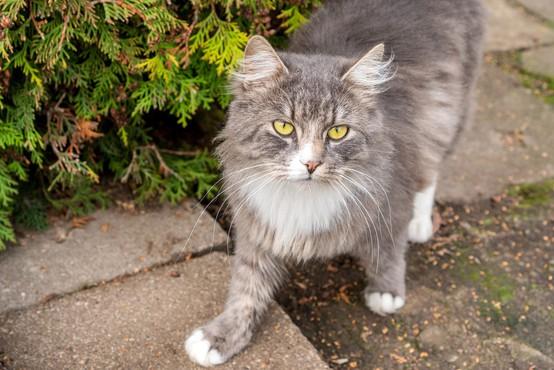 Svetovni dan mačk: med epidemijo več posvojitev, a še vedno jih na nov doma čaka veliko