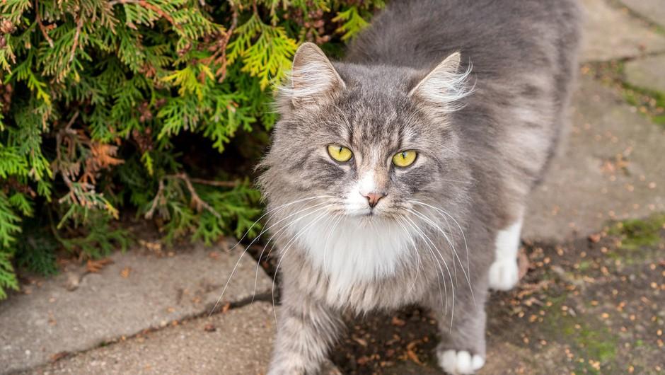 Svetovni dan mačk: med epidemijo več posvojitev, a še vedno jih na nov doma čaka veliko (foto: profimedia)
