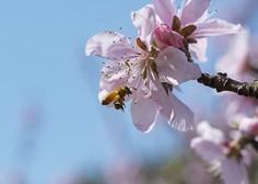 Kombinacija farmacevtskih sredstev močno ogroža čebele