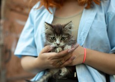 Nova študija: mački naj bi lastnike videli kot starše -  morda celo bolj kot psi