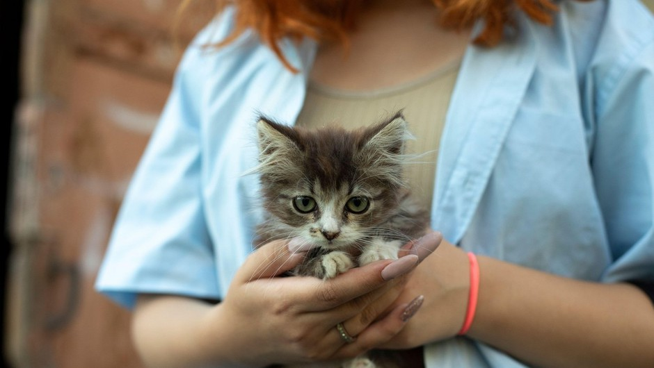 Nova študija: mački naj bi lastnike videli kot starše -  morda celo bolj kot psi (foto: Profimedia)