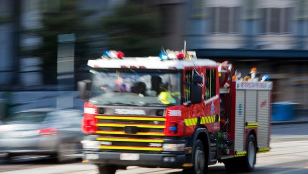 Avstralske požare preživel redek vrečar, ki pogine po množičnem parjenju (foto: Profimedia)