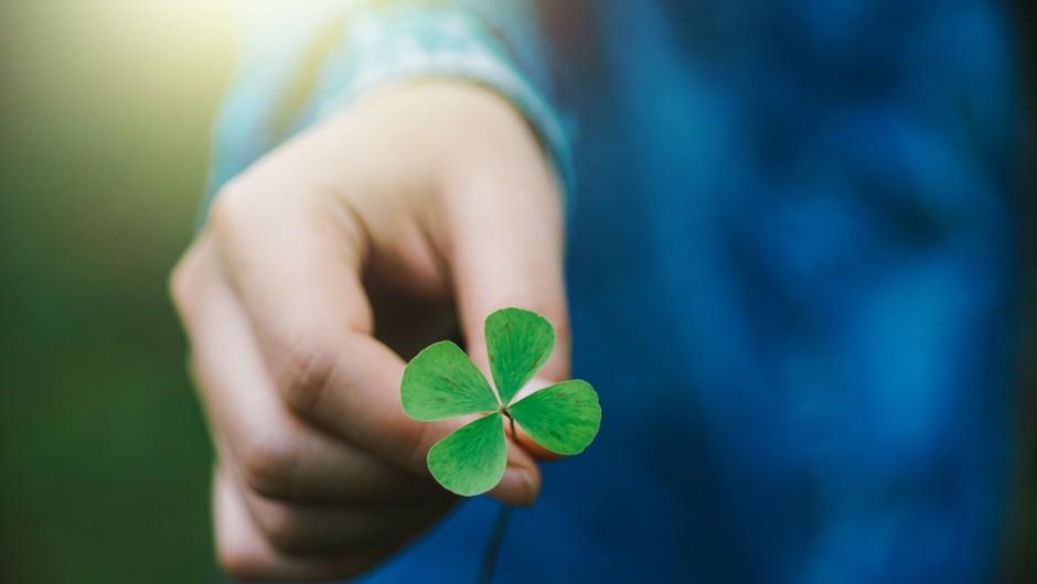 Malo za šalo, malo zares: štiriperesne deteljice so simbol sreče. Zakaj? (foto: Shutterstock)