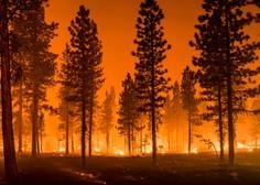 Kje tičijo pravi vzroki vse pogostejših obsežnih požarov v naravi?