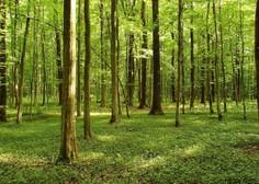 Kaj imajo podnebne spremembe opraviti z gozdovi?  (Piše: Vid Legradić)