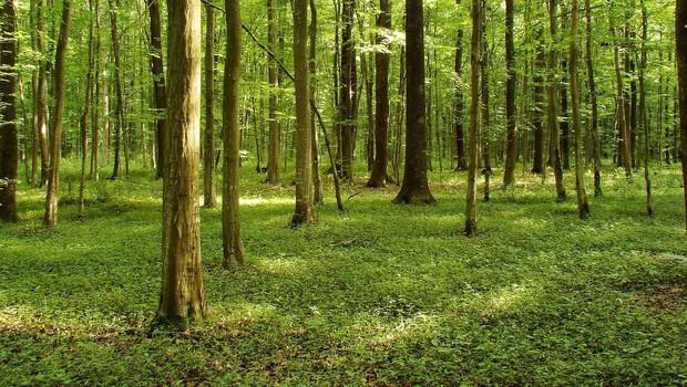 Kaj imajo podnebne spremembe opraviti z gozdovi?  (Piše: Vid Legradić) (foto: profimedia)