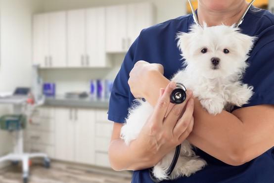 Veterinar razkril, kaj domači ljubljenčki počno v zadnjih trenutkih življenja – in kakšna je naloga lastnika