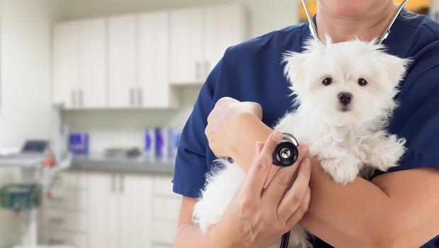 Veterinar razkril, kaj domači ljubljenčki počno v zadnjih trenutkih življenja – in kakšna je naloga lastnika (foto: Profimedia)