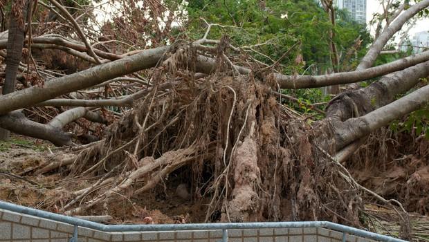 V zadnjih 50 letih petkratno povečanje vremenskih katastrof (foto: Profimedia)